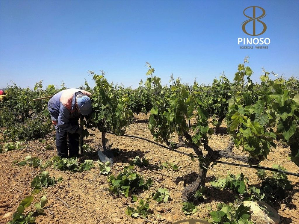 La Bodega de Pinoso, biowijn.shop (10)