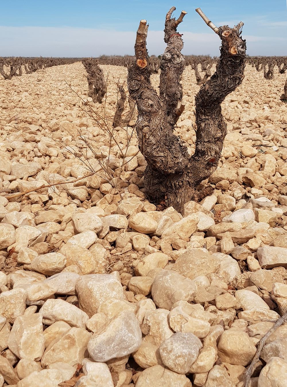 Bodegas Tempore | wijngaard 3 | biowijnshop