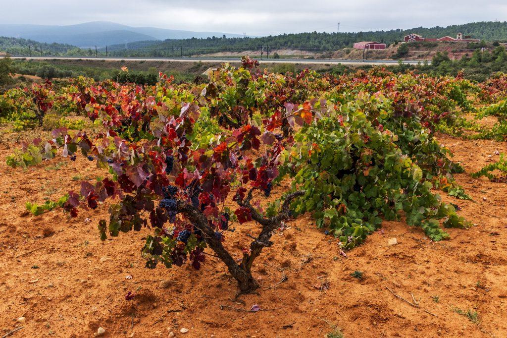 Viñedos & Bodegas Vegalfaro, Bobal vines, biowijn,shop