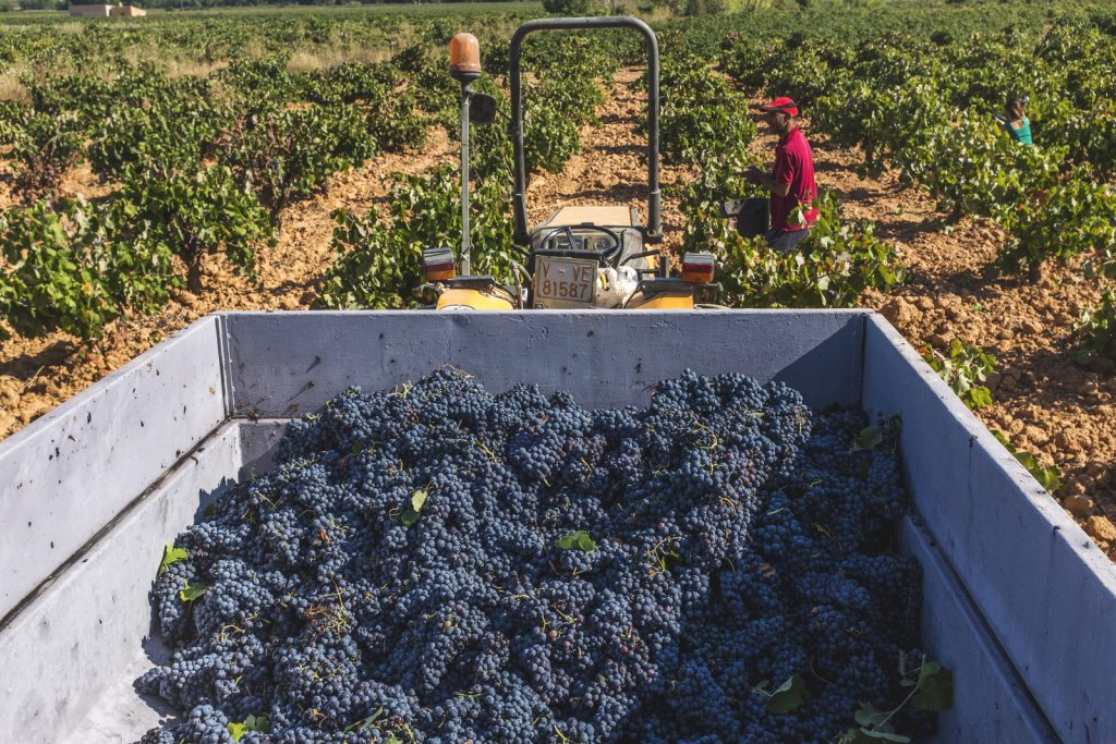 Viñedos & Bodegas Vegalfaro, manual harvest | biowijn.shop